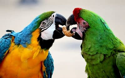 My Diet Recommendations for Parrots
